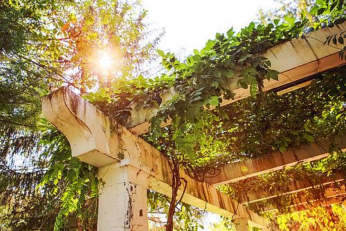 5 Roślin Idealnych Na Pergolę I Do Altany Greenworkspolskapl